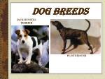 dog breeds11