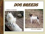 dog breeds12