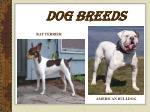 dog breeds13