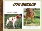dog breeds14