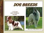 dog breeds15