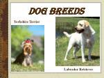dog breeds18