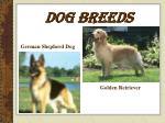 dog breeds19