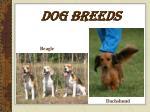 dog breeds20