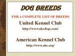 dog breeds29