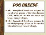 dog breeds3