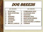 dog breeds4