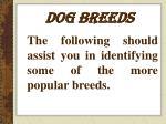 dog breeds7
