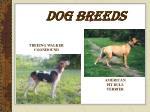 dog breeds8