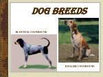 dog breeds9