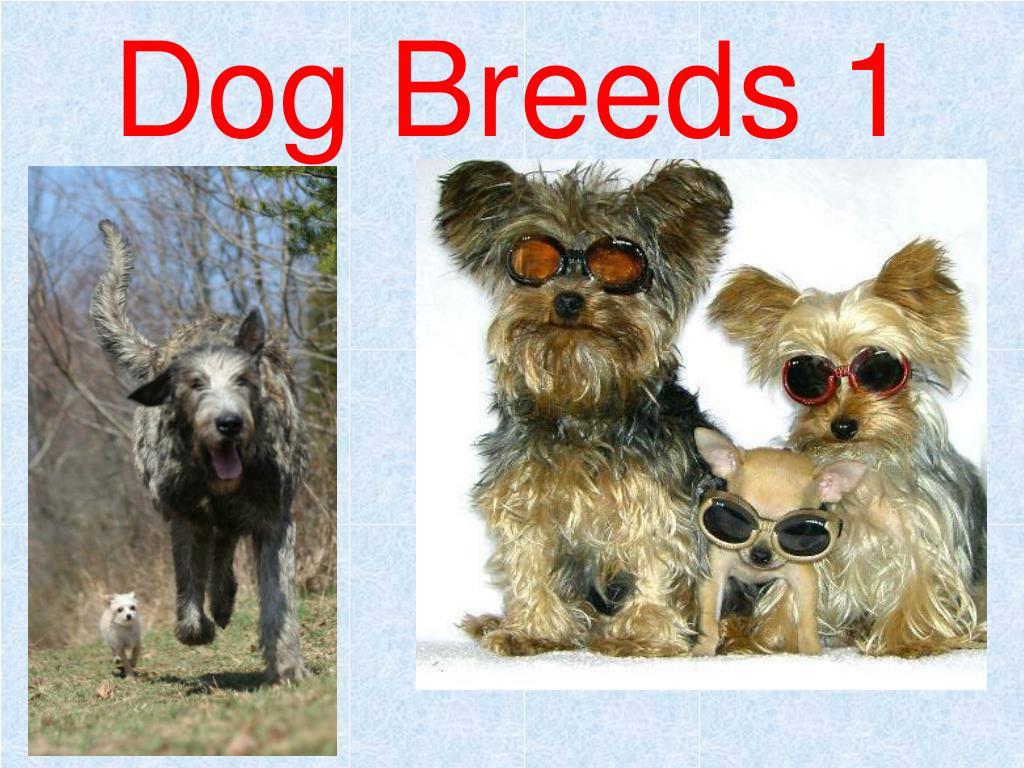 dog breeds 1 l.