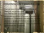 fermentacion y maduracion9