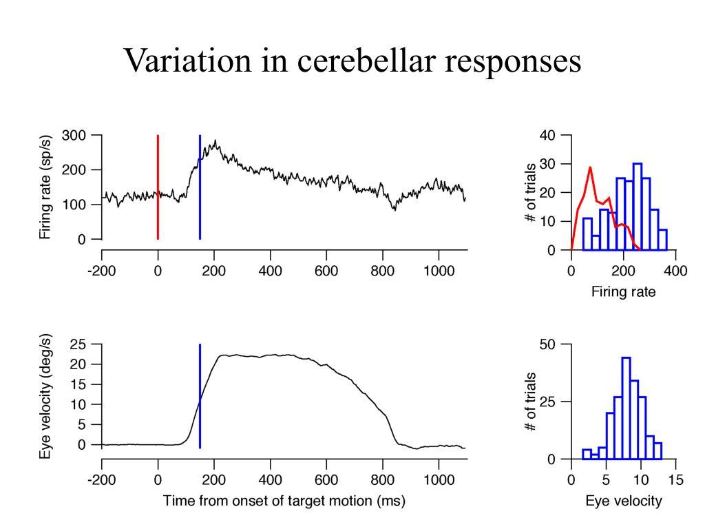 Variation in cerebellar responses