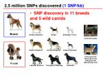 2 5 million snps discovered 1 snp kb