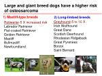 large and giant breed dogs have a higher risk of osteosarcoma