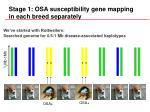 stage 1 osa susceptibility gene mapping in each breed separately