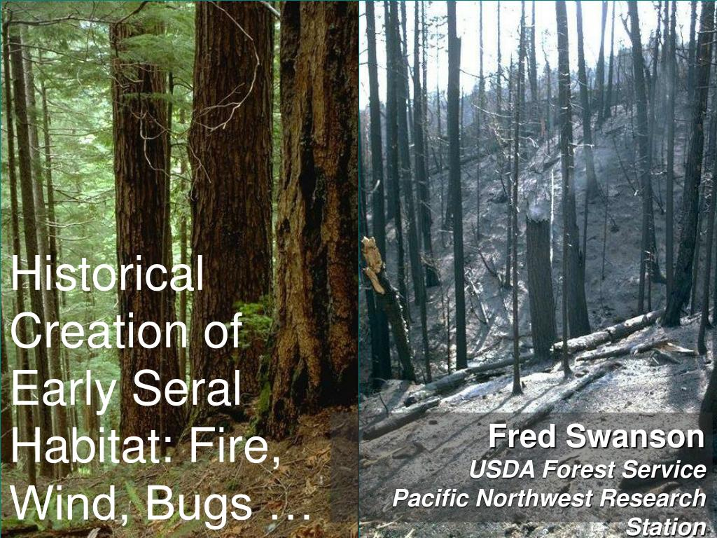 historical creation of early seral habitat fire wind bugs l.