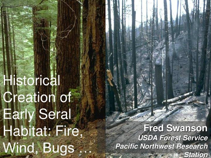 Historical creation of early seral habitat fire wind bugs