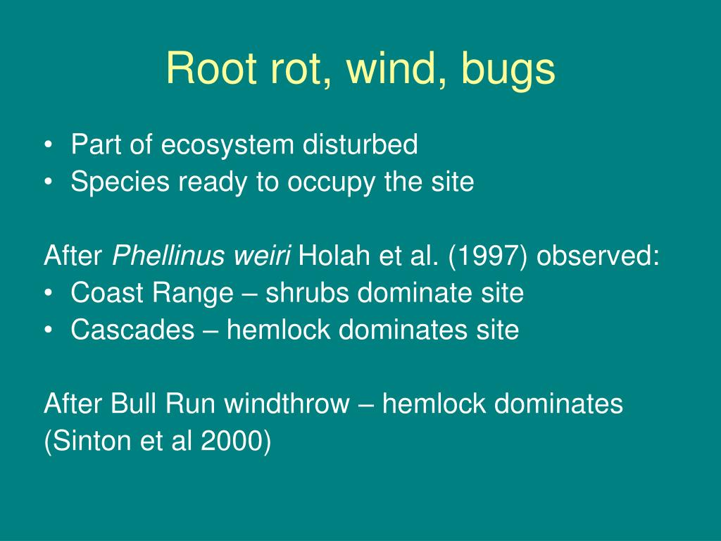 Root rot, wind, bugs
