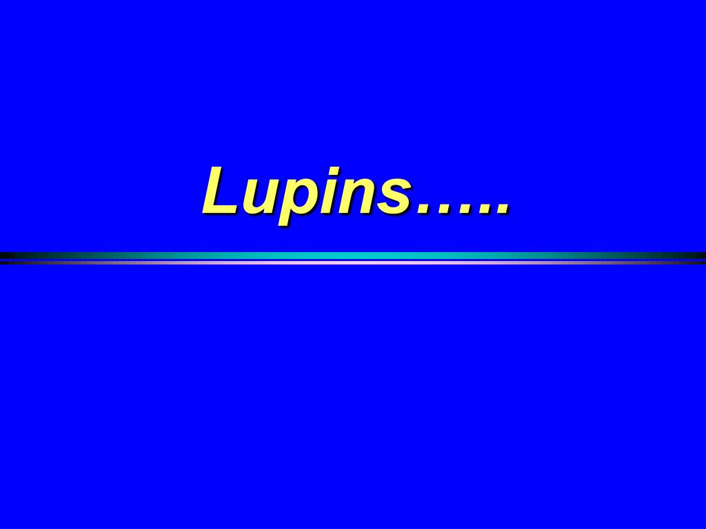 Lupins…..