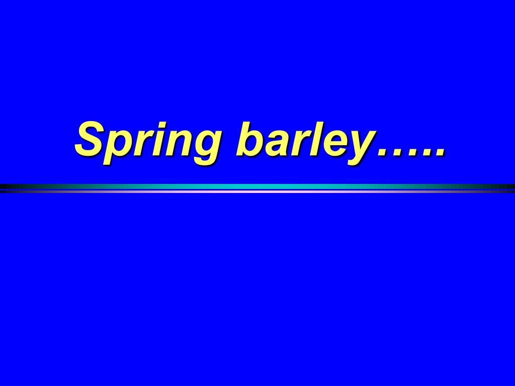 Spring barley…..