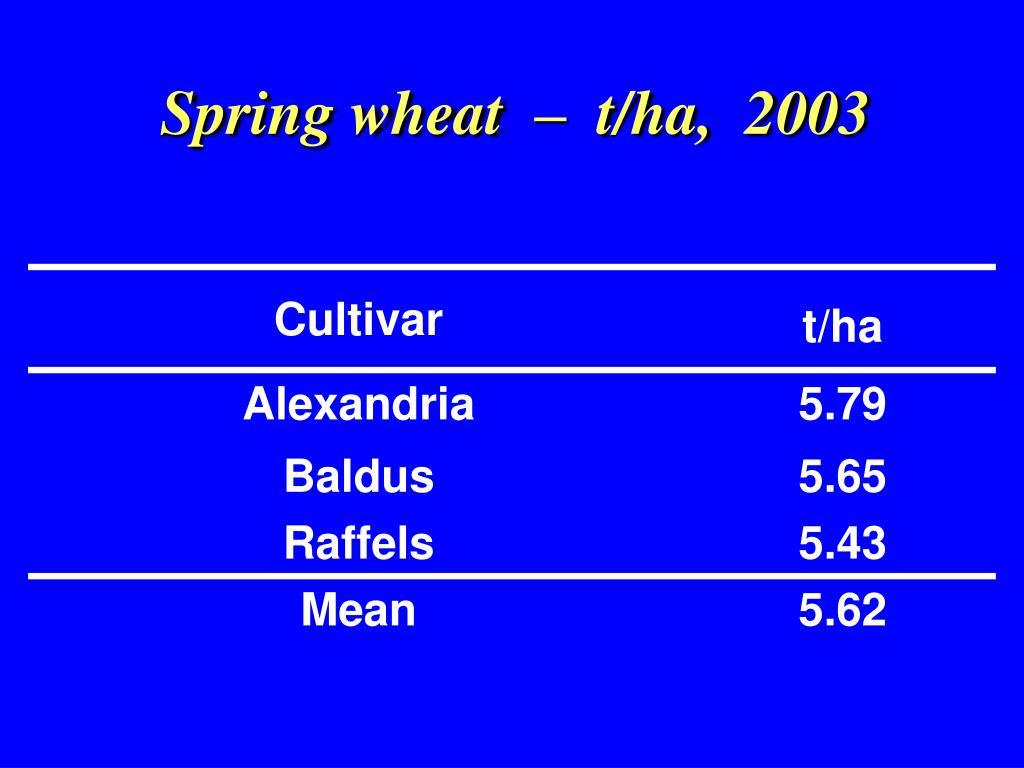 Spring wheat  –  t/ha,  2003