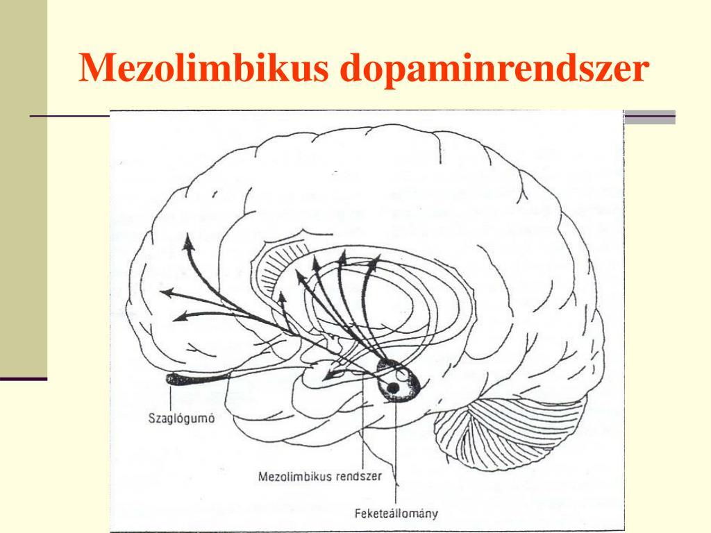 Mezolimbikus dopaminrendszer