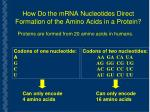 how do the mrna nucleotides direct formation of the amino acids in a protein