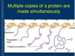 multiple copies of a protein are made simultaneously