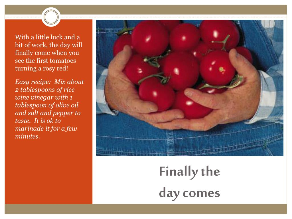 With a little luck and a bit of work, the day will finally come when you see the first tomatoes turning a rosy red!