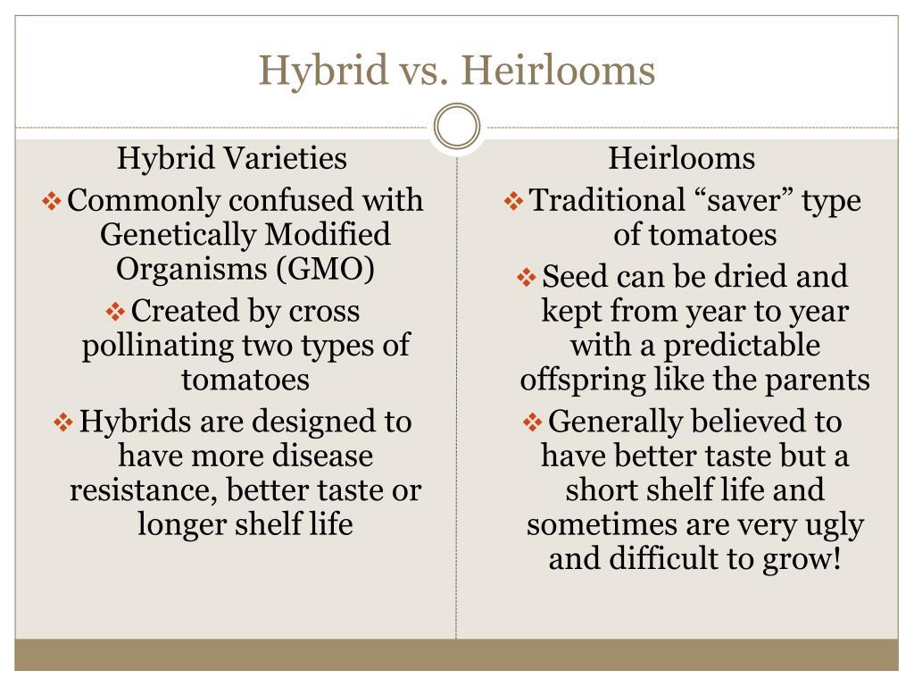 Hybrid vs. Heirlooms