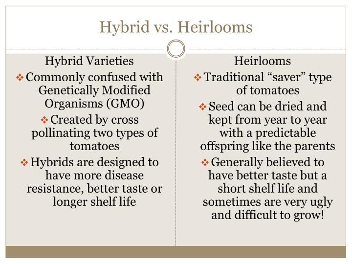 Hybrid vs heirlooms