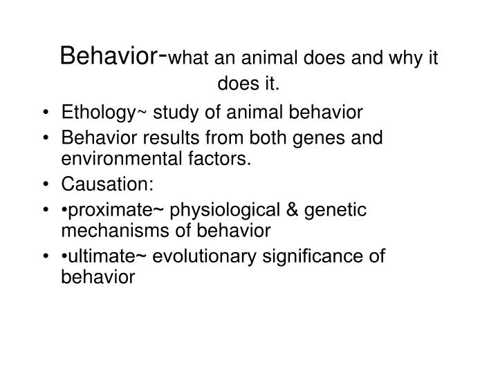 Behavior what an animal does and why it does it