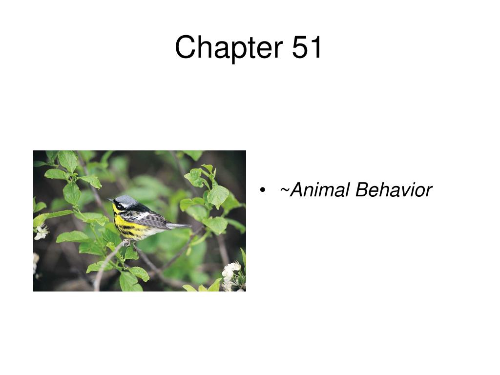 an analysis of animal behaviors and genetics in ethological studies What percent of animal behavior studies use white that causes animal behavior disadvantages of ethological psychology, behavior genetics.