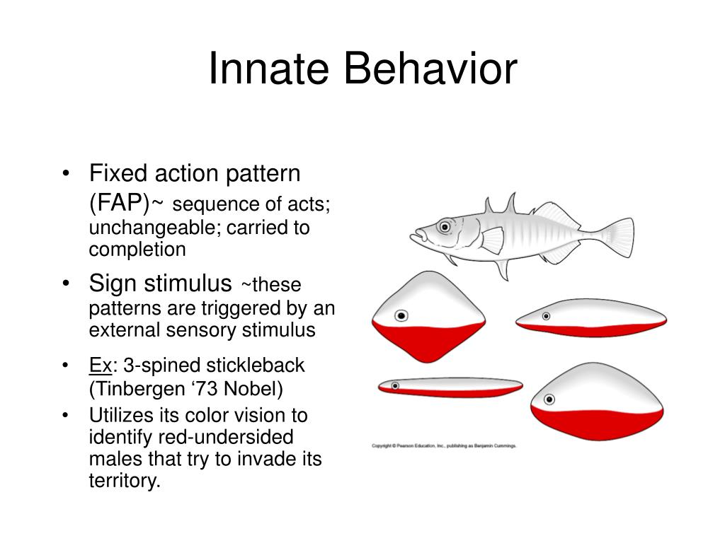Innate Behavior