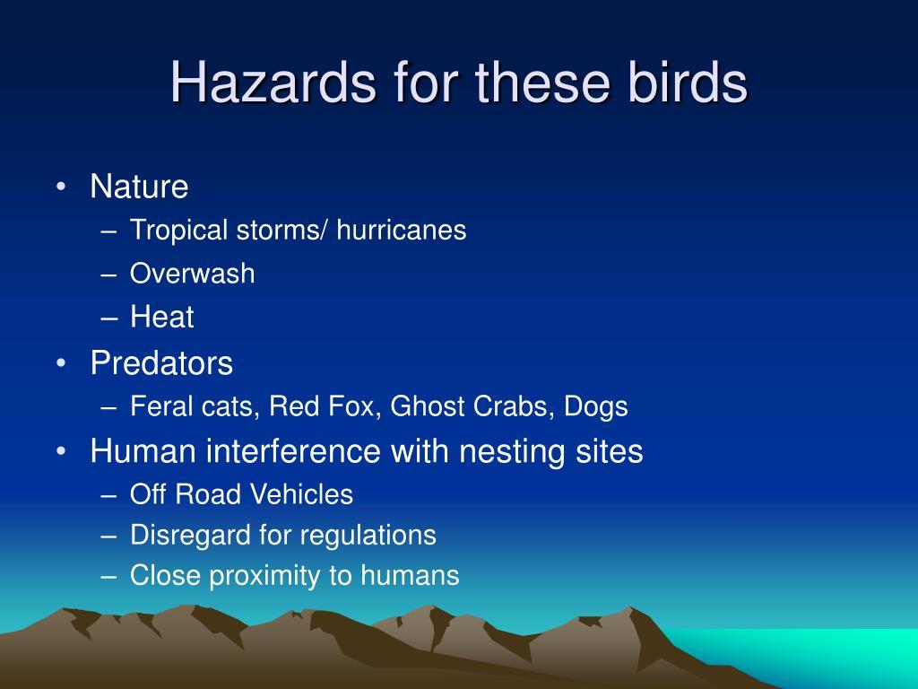 Hazards for these birds