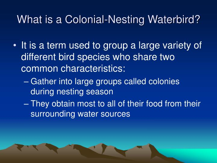 What is a colonial nesting waterbird