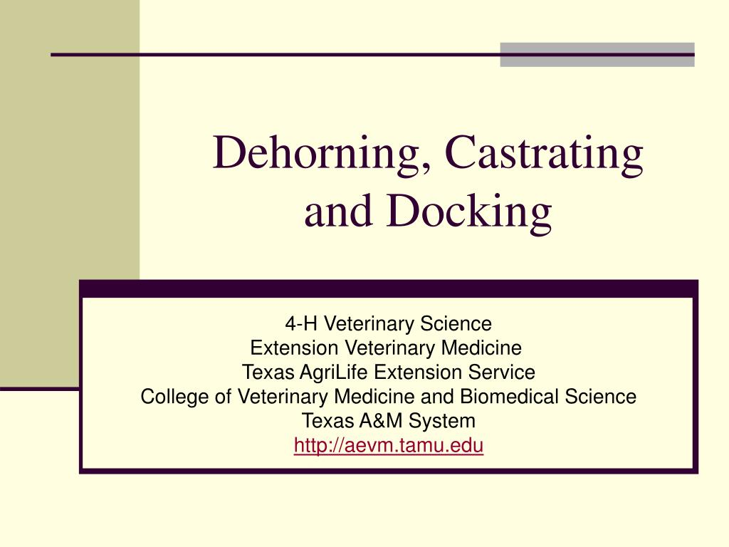dehorning castrating and docking l.