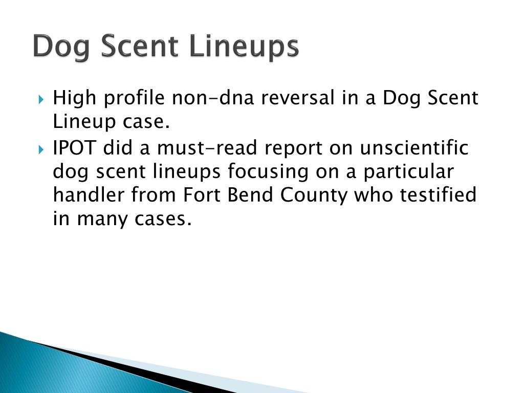 Dog Scent Lineups