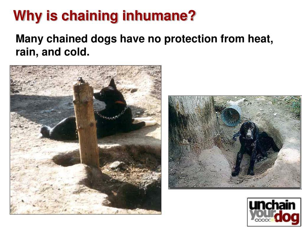Why is chaining inhumane?