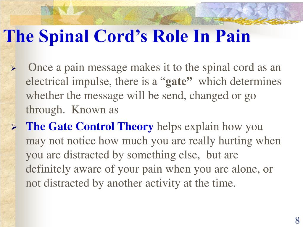 The Spinal Cord's Role In Pain