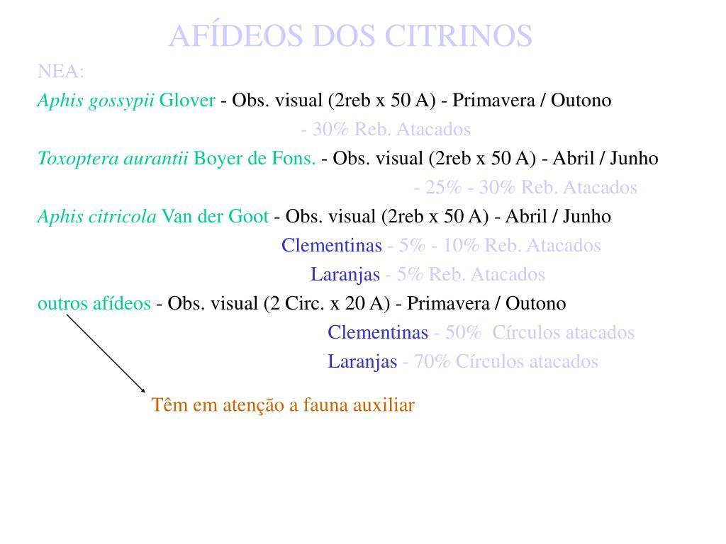 AFÍDEOS DOS CITRINOS