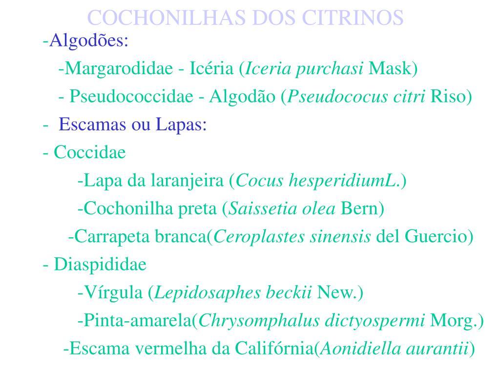 COCHONILHAS DOS CITRINOS