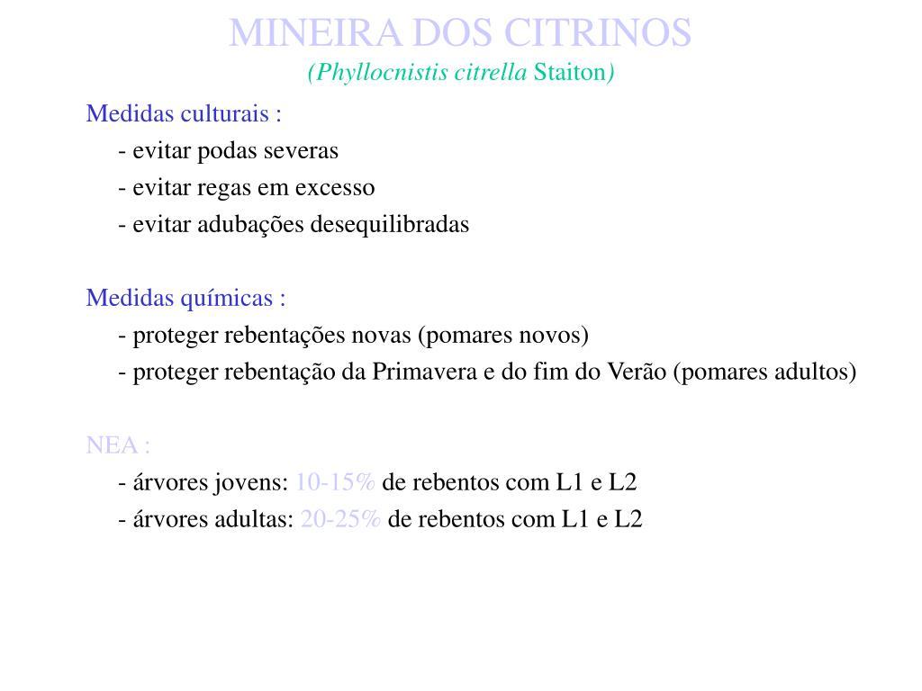 MINEIRA DOS CITRINOS