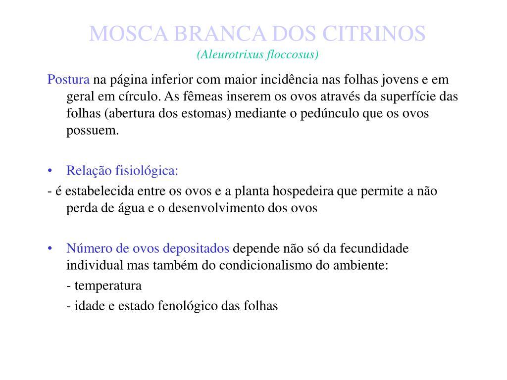 MOSCA BRANCA DOS CITRINOS