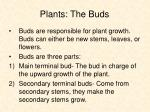 plants the buds