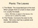 plants the leaves12