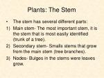 plants the stem7