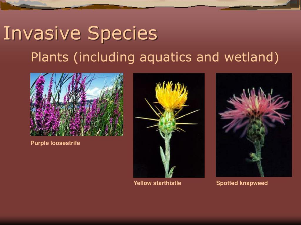 Plants (including aquatics and wetland)