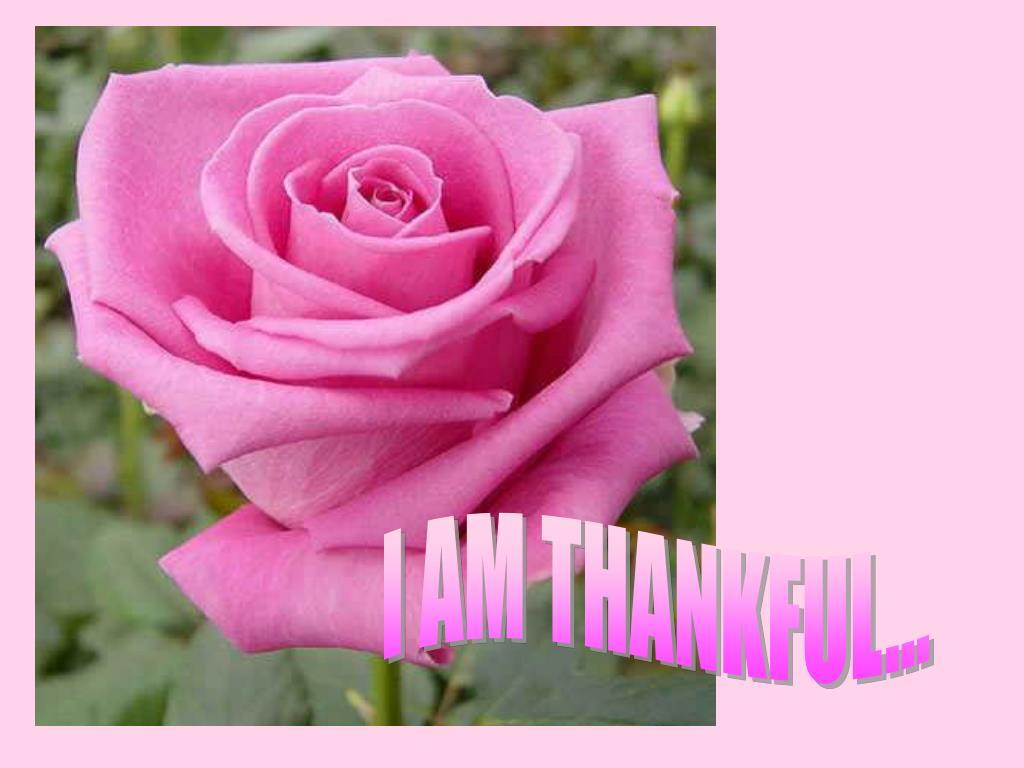 I AM THANKFUL...